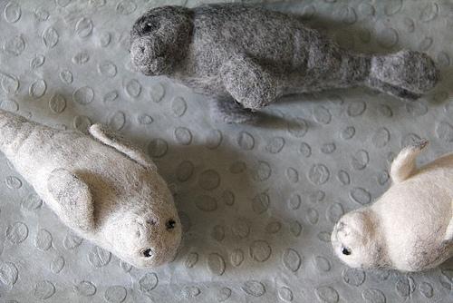 Reino animal ¡focas!